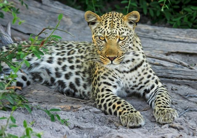 Park exotických zvířat – zoologická zahrada